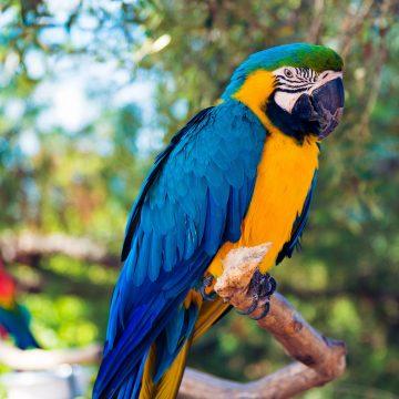 ציפורים ותוכים – חיות מחמד מדהימות