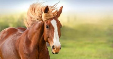 סוסים – טיפול רגשי לילד עם סוס