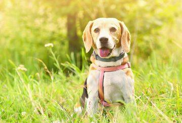 כלבים לאימוץ – האם לאמץ או לקנות