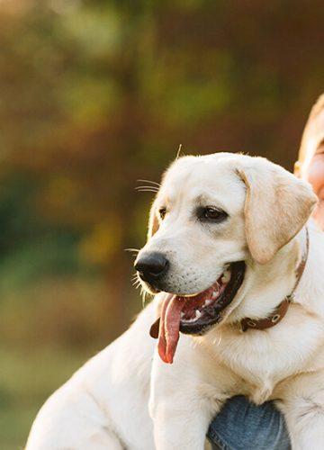 הכלב – חברו הטוב והנאמן של האדם
