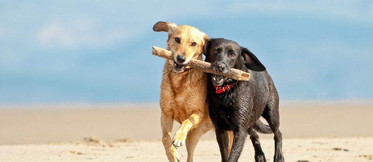 חברות בין כלבים – האם זה אמיתי ?