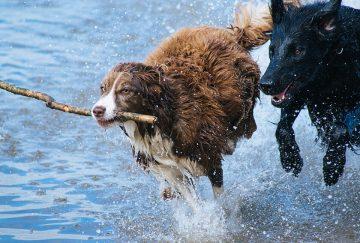 משחקים לכלבים – כלב שמוציא אנרגיה זה כלב רגוע