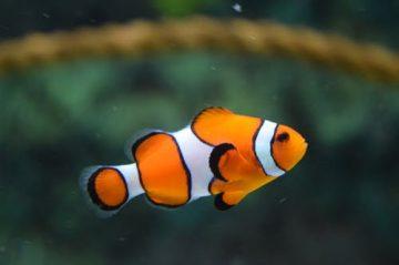 דגי נוי מים מלוחים – פנטזיה באקווריום